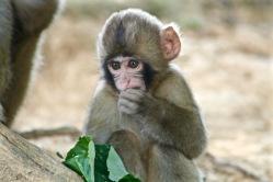 Arashiyama - Monkeys Park