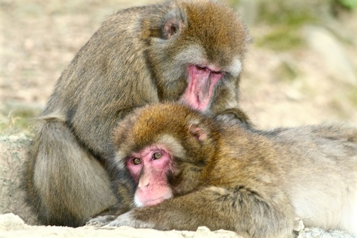 Arashiyama - Monkeys Park
