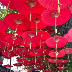 Red umbrellas - Chiang Mai
