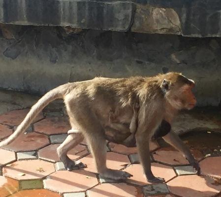 Monkeys - Prachuap Khiri Khan