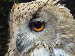 Owl Cafè