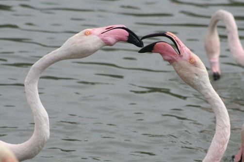 """Parco ornitologico di """"Pont De Gau"""""""